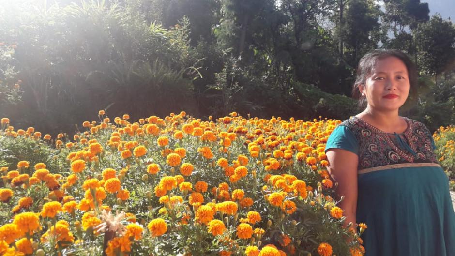 Flower Plantation in Anugrah Homestay in Lower Toryok Sittong, Kurseong