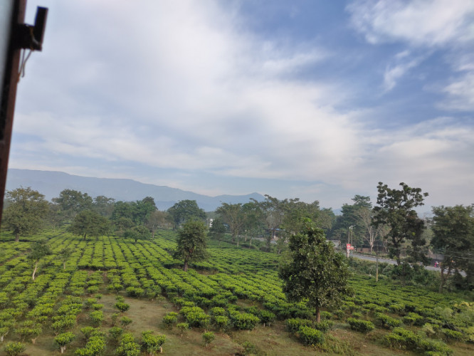 Beautiful view of Dagapur tea garden