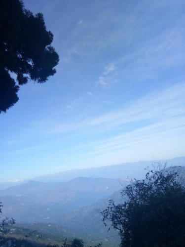 Darjeeling Singmari - View of the wonderful tree