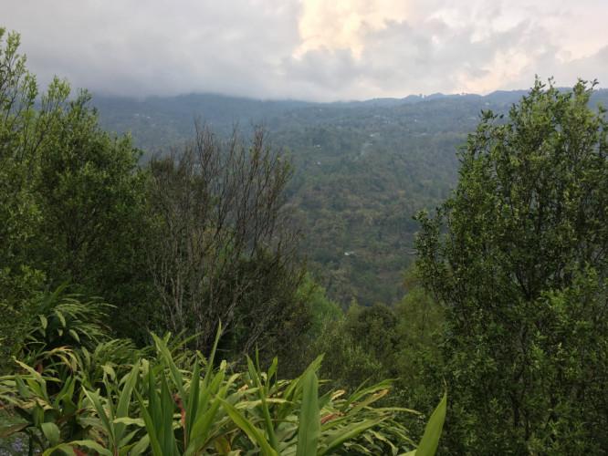 Orange Plantation in Lower Turuk - Sittong